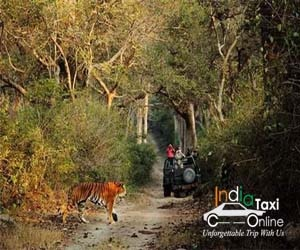 Delhi to Jim Corbett Taxi Fare
